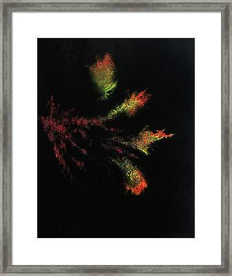 Flower Darkness Framed Print by Colin Young