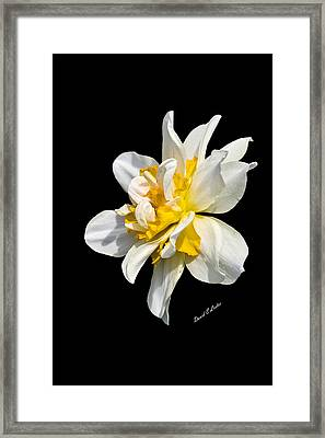 Framed Print featuring the photograph Flower by David Lester