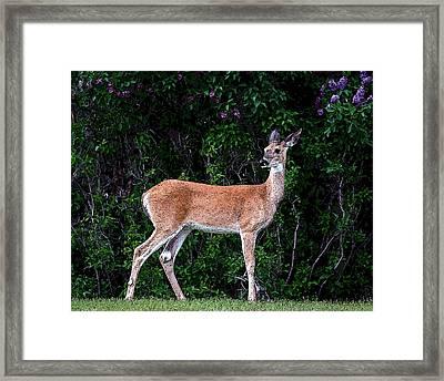 Framed Print featuring the photograph Flower Deer by Steve McKinzie
