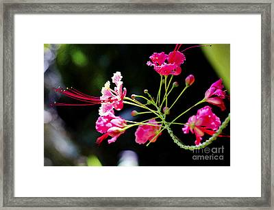 Flower Digital Painting Framed Print by Pravine Chester