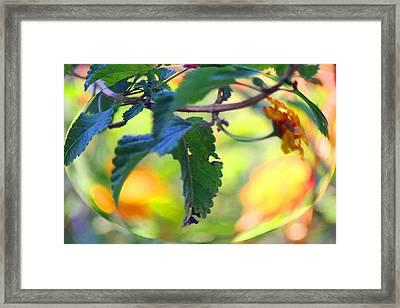 Framed Print featuring the photograph Flower Droplet by Carolina Liechtenstein