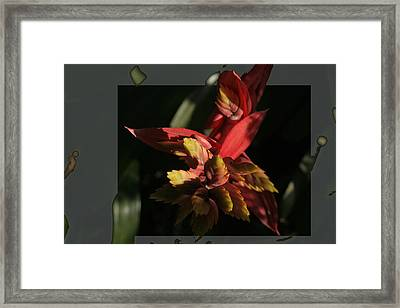 Framed Print featuring the photograph Flower Explosion by Lou Belcher