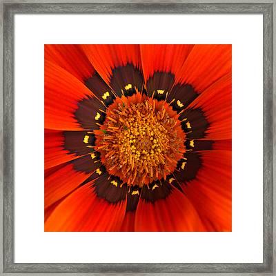 Flower Eye Framed Print