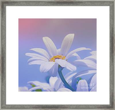 Flower For You Framed Print by Jutta Maria Pusl