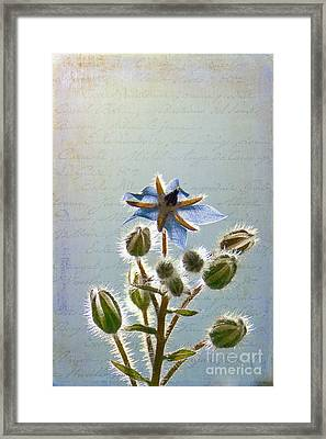 Flower Fuzz Framed Print