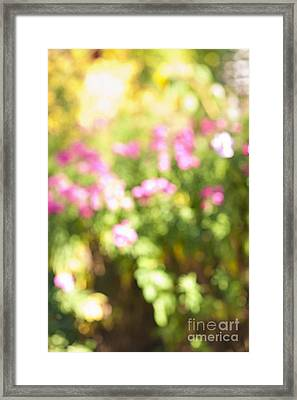 Flower Garden In Sunshine Framed Print by Elena Elisseeva