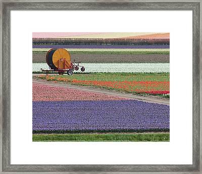 Flower Garden Framed Print by Tia Anderson-Esguerra