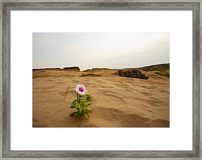 Flower In Desert Framed Print by Panya Jampatong