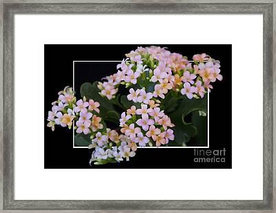 Flower In Frame -12 Framed Print