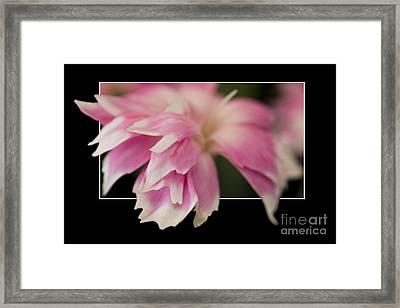 Flower In Frame -2 Framed Print