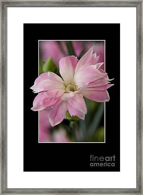 Flower In Frame -3 Framed Print