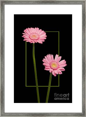 Flower In Frame -7 Framed Print