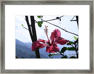 Flower In Sunlight Framed Print