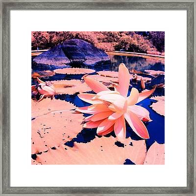 #flower #instahub #instagood #instamood Framed Print by Tommy Tjahjono