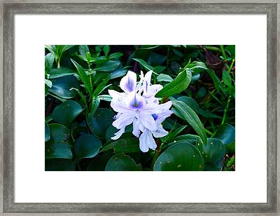 Flower Framed Print by Jake Busby