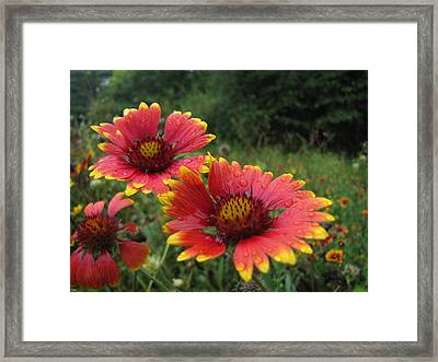 Framed Print featuring the photograph Flower by John Crothers