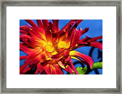 Framed Print featuring the photograph Flower by Kelly Reber