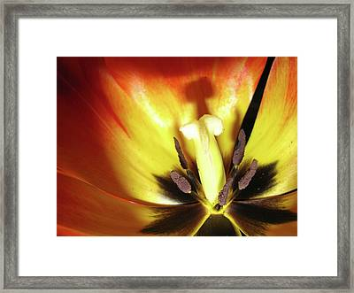 Flower Life Framed Print by Mike Stouffer