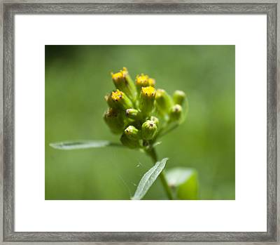 Flower Macro Framed Print by M Valeriano