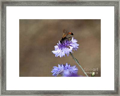 Framed Print featuring the photograph Flower Meal by Tamera James
