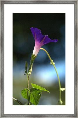 Framed Print featuring the photograph Flower by Michael Dohnalek