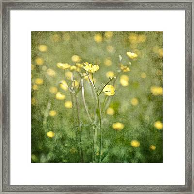 Flower Of A Buttercup In A Sea Of Yellow Flowers Framed Print