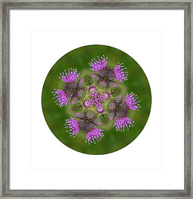 Framed Print featuring the photograph Flower Of Scotland by Lynn Bolt