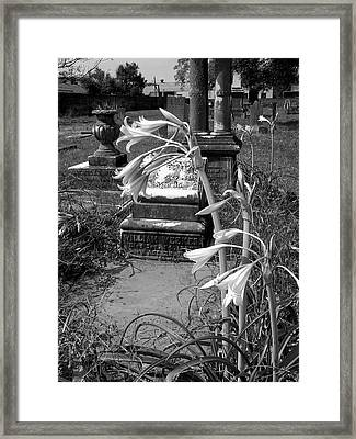 Flower Old Grave Framed Print by Floyd Smith