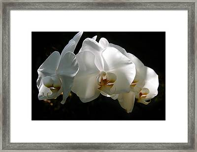 Flower Painting 0004 Framed Print by Metro DC Photography