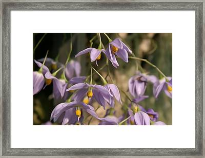Flower Painting 0008 Framed Print by Metro DC Photography