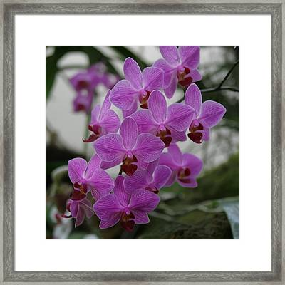 Flower Painting 0009 Framed Print by Metro DC Photography