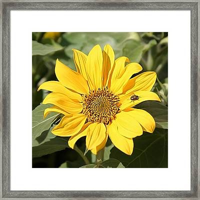 Flower Painting 0010 Framed Print by Metro DC Photography