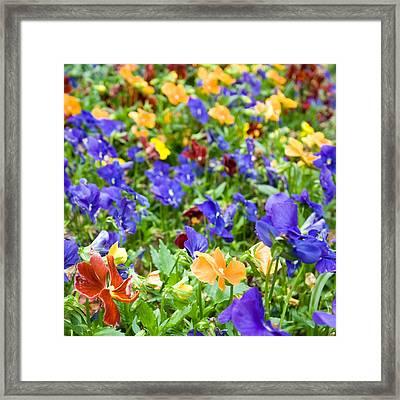 Flower Palette Framed Print by Laura George