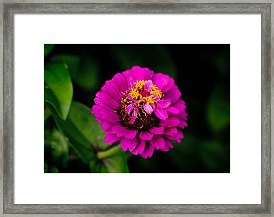 Flower Pink Framed Print by Joris Shaw