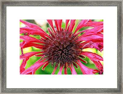Flower Pink Framed Print