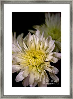 Flower Power Framed Print by David Taylor