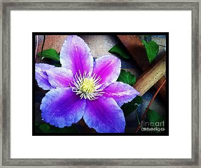 Flower Rack Framed Print by Renzo Roso