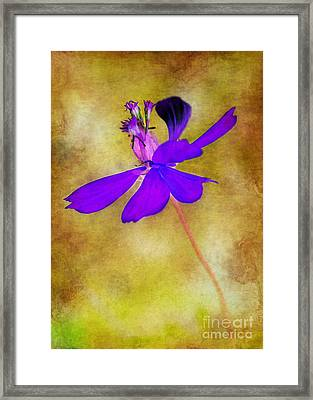 Flower Take Flight Framed Print by Judi Bagwell