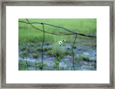 Flower Through The Fence Line Framed Print by Theresa Willingham