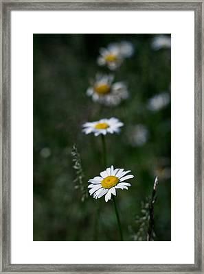 Flower Trail Framed Print by Stephen Thomason