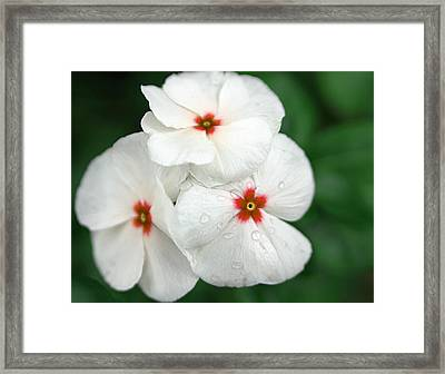 Flower Trio Framed Print