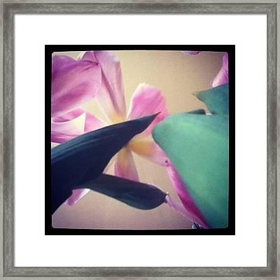 #flower #upsidedown #lookingup #wow Framed Print