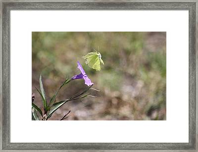 Flower Which Did Sway The Butterfly Flew Away Framed Print by Connie Koehler