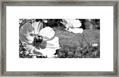 Flower With Company Framed Print by Sanjay Avasarala