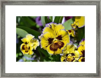 Flower With Pruple Trim Framed Print by Artie Wallace