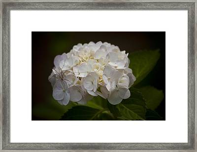 Flower With Spider Framed Print
