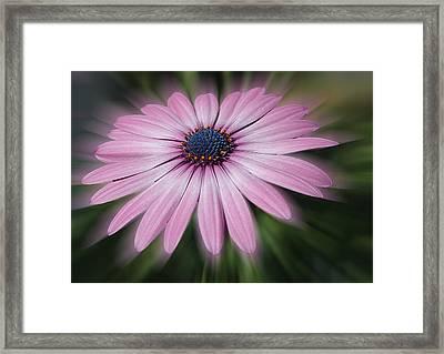 Flower Zoom Framed Print