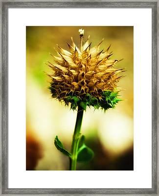 Flowered Thorns Framed Print
