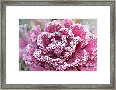 Flowering Cabbage Framed Print by Yumi Johnson