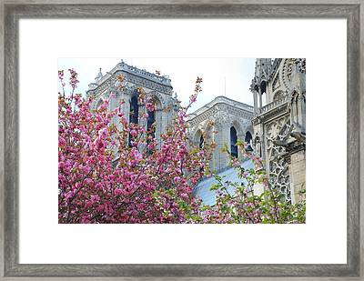 Flowering Notre Dame Framed Print by Jennifer Ancker